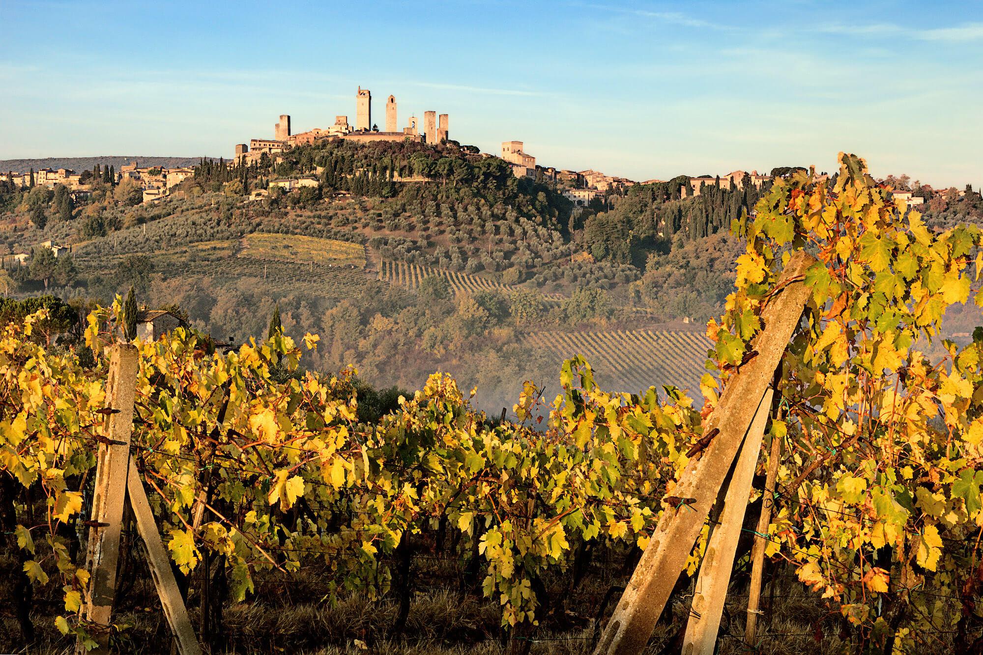 Veduta di San Gimignano circondato dalle vigne